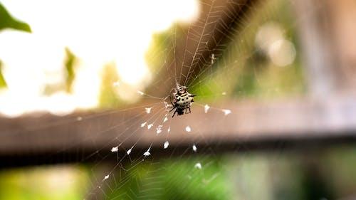 Free stock photo of animal, arachnid, bermuda