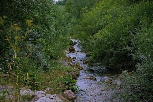 Бесплатное стоковое фото с водопад, горы, зеленый, лето