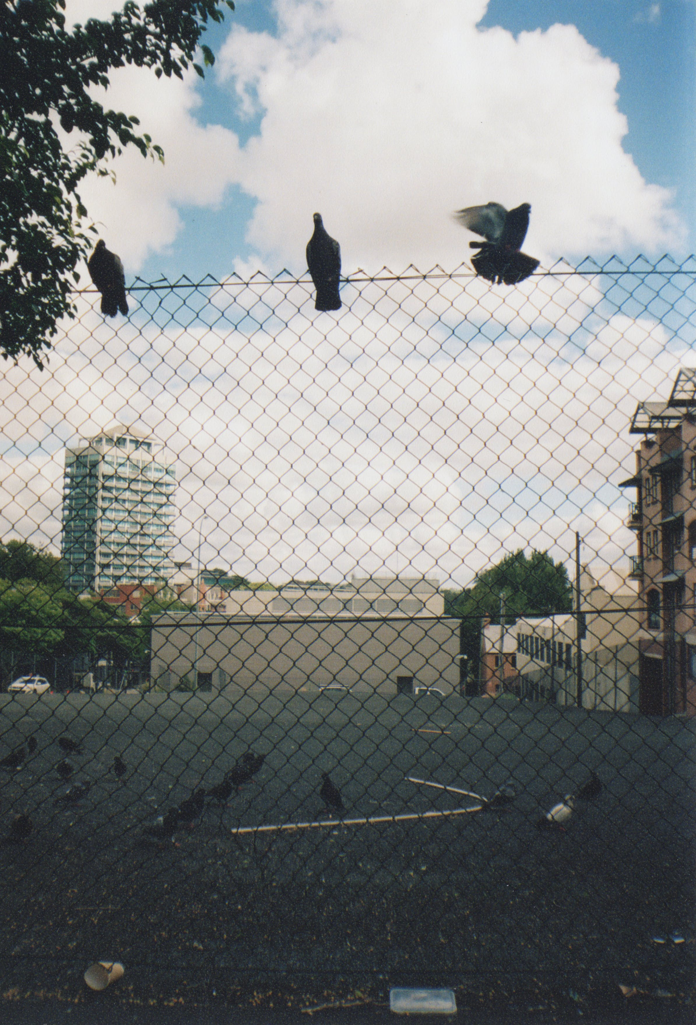 Free stock photo of 35mm, birds, car park, chain link fence