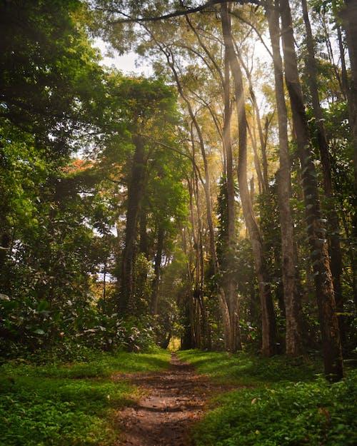 Foto d'estoc gratuïta de arbres, bosc, boscos, calma