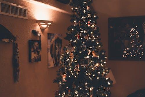 Foto d'estoc gratuïta de adorns, arbre, arbre de Nadal, avet