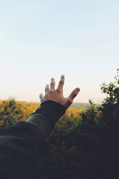 Gratis lagerfoto af hånd, makro, række ud