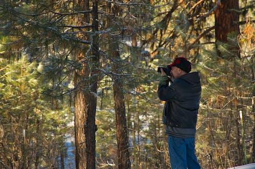 Immagine gratuita di alberi, boschi, foresta, fotografo