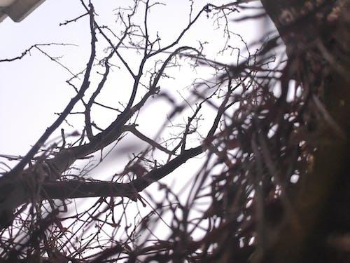 Imagine de stoc gratuită din alb-negru, arbore, copac mort
