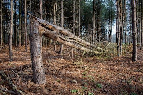 冬季, 原本, 森林 的 免費圖庫相片