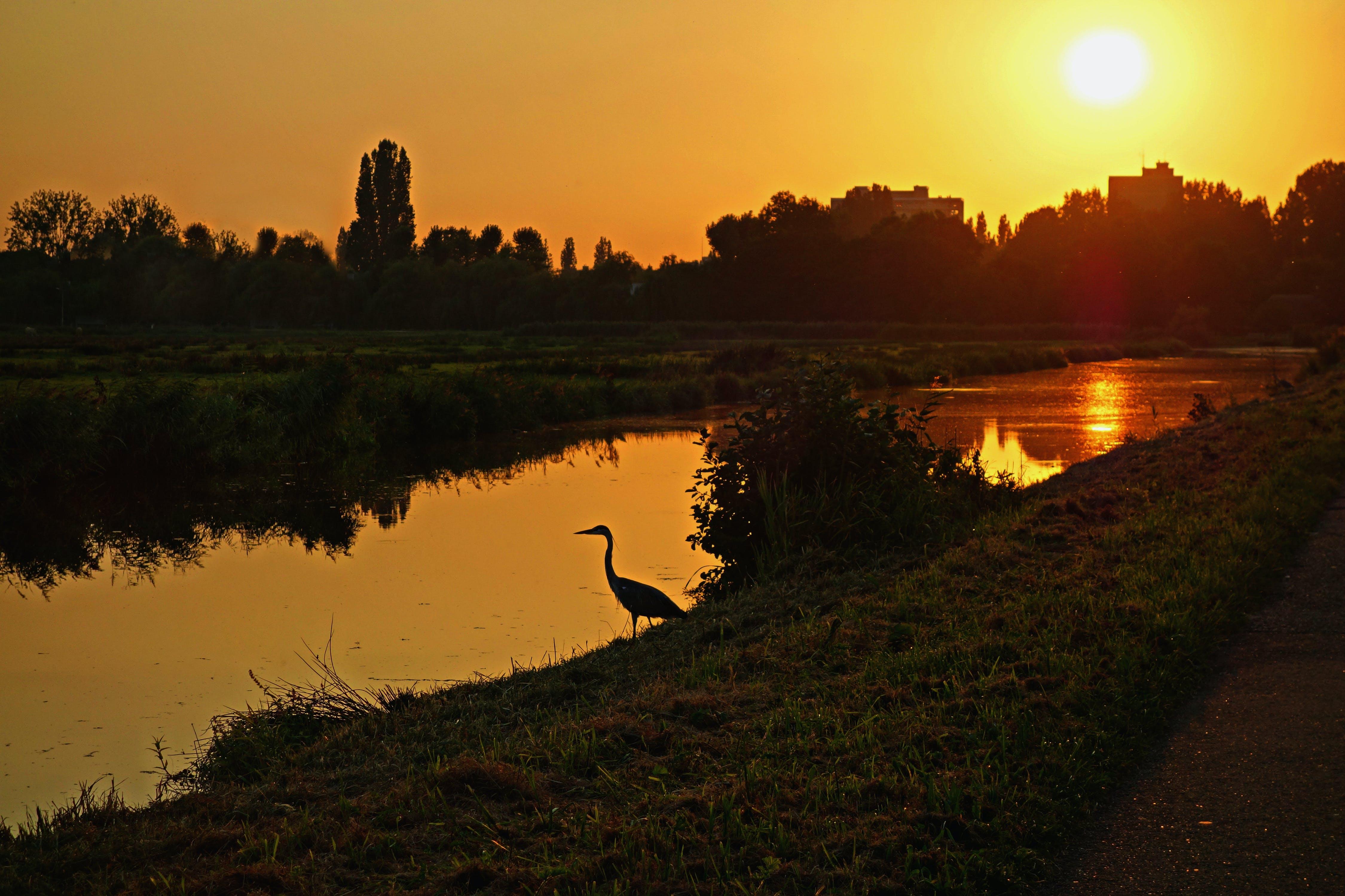 bird, bird  glow  golden glow  heron  silhouette  skylin, glow