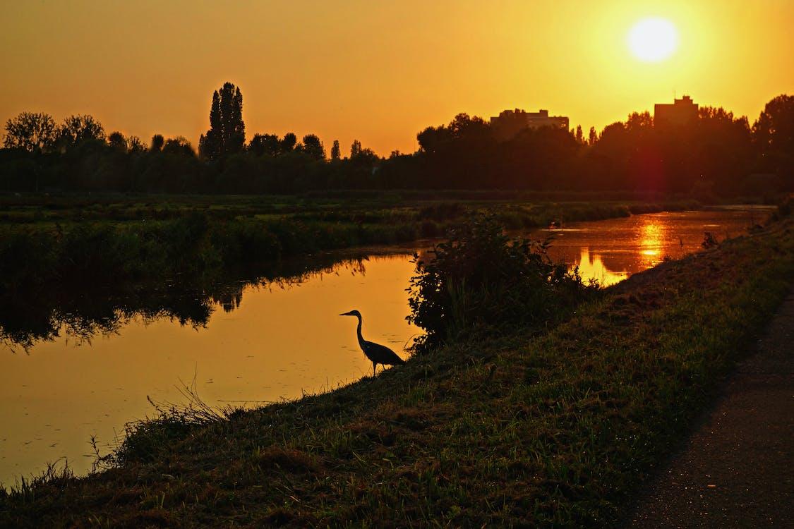 bird  glow  golden glow  heron  silhouette  skylin, glow, golden glow