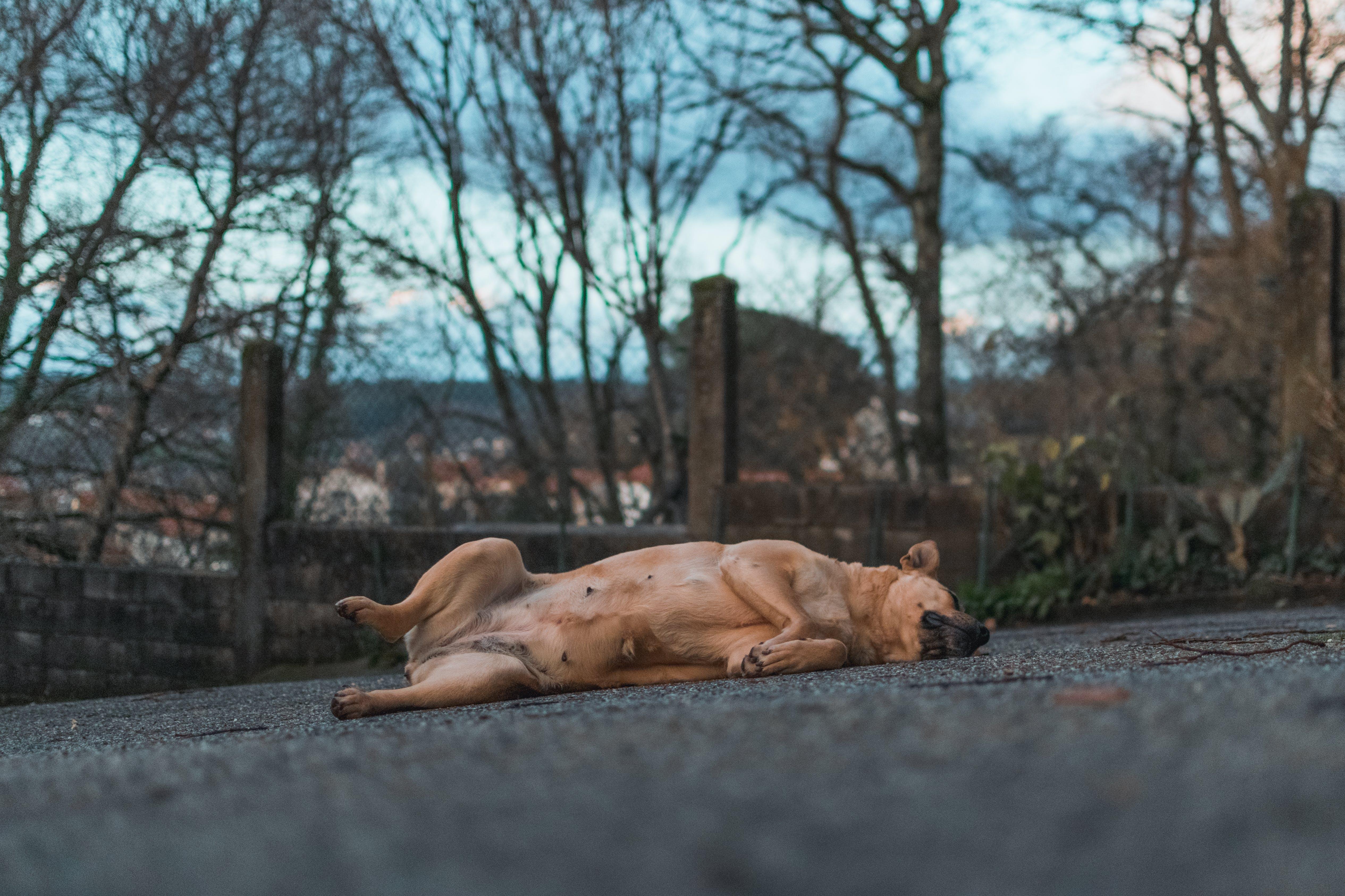 Photos gratuites de animal, animal de compagnie, animal domestique, béton