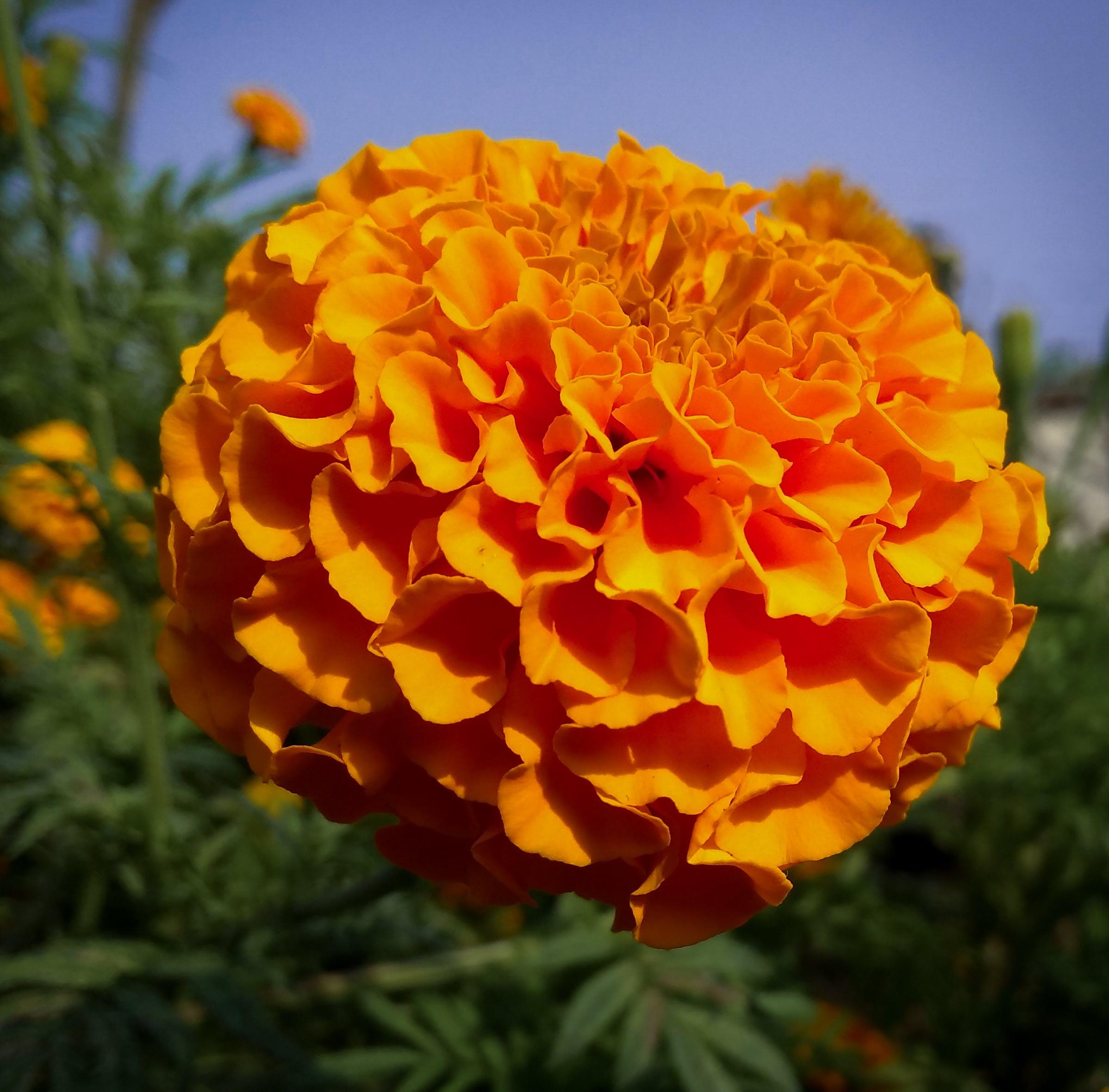 Free stock photo of bloom, blue sky, flower, focus