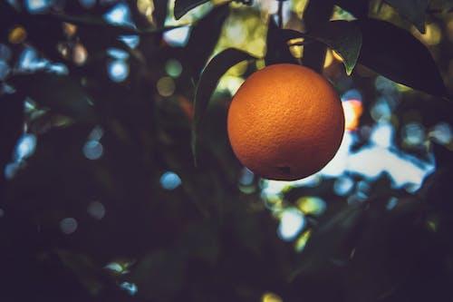 Gratis arkivbilde med appelsin, appelsintre, frisk, frukt