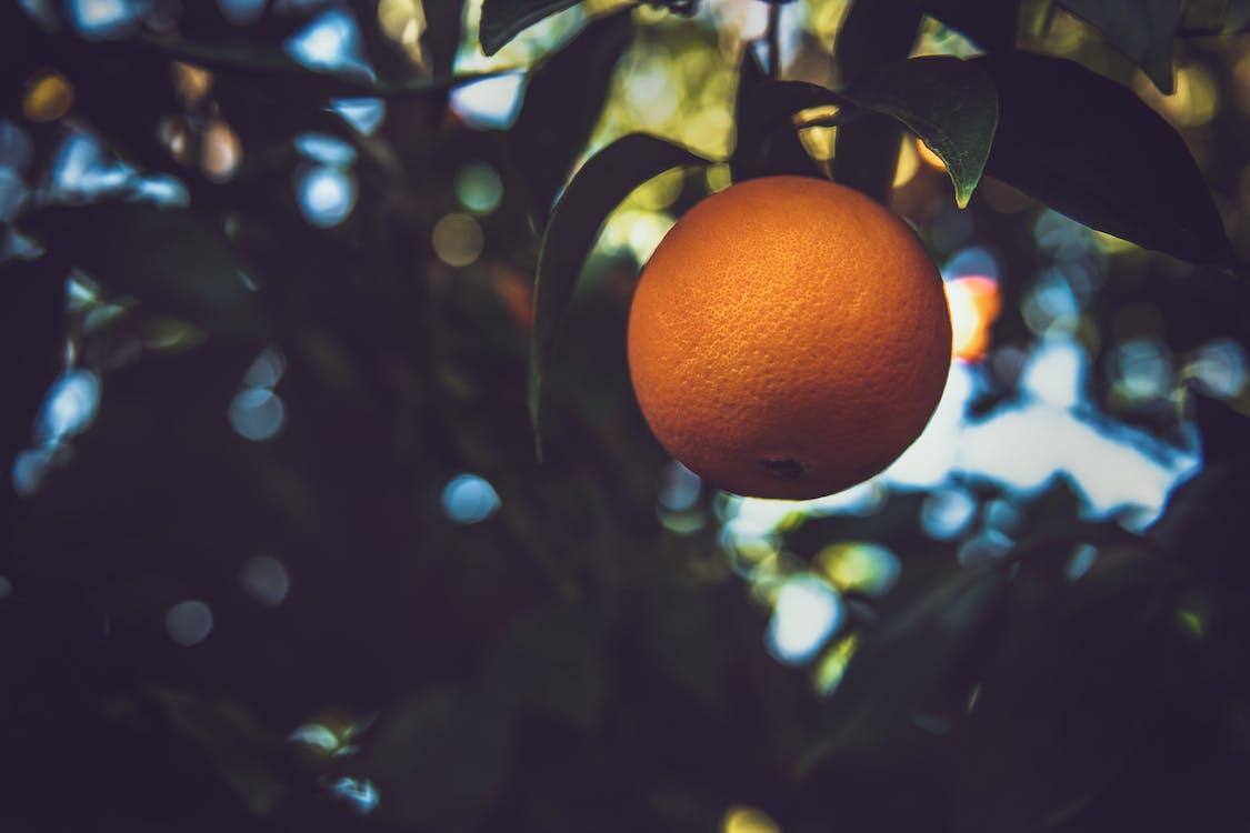 Fotografia Di Messa A Fuoco Selettiva Di Frutta Arancione Su Albero