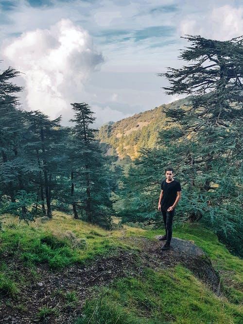 Photos gratuites de arbres, debout, forêt, homme