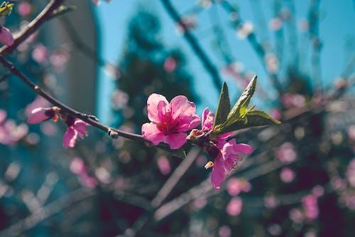 Kostnadsfri bild av blå, blomma, blommor, färg