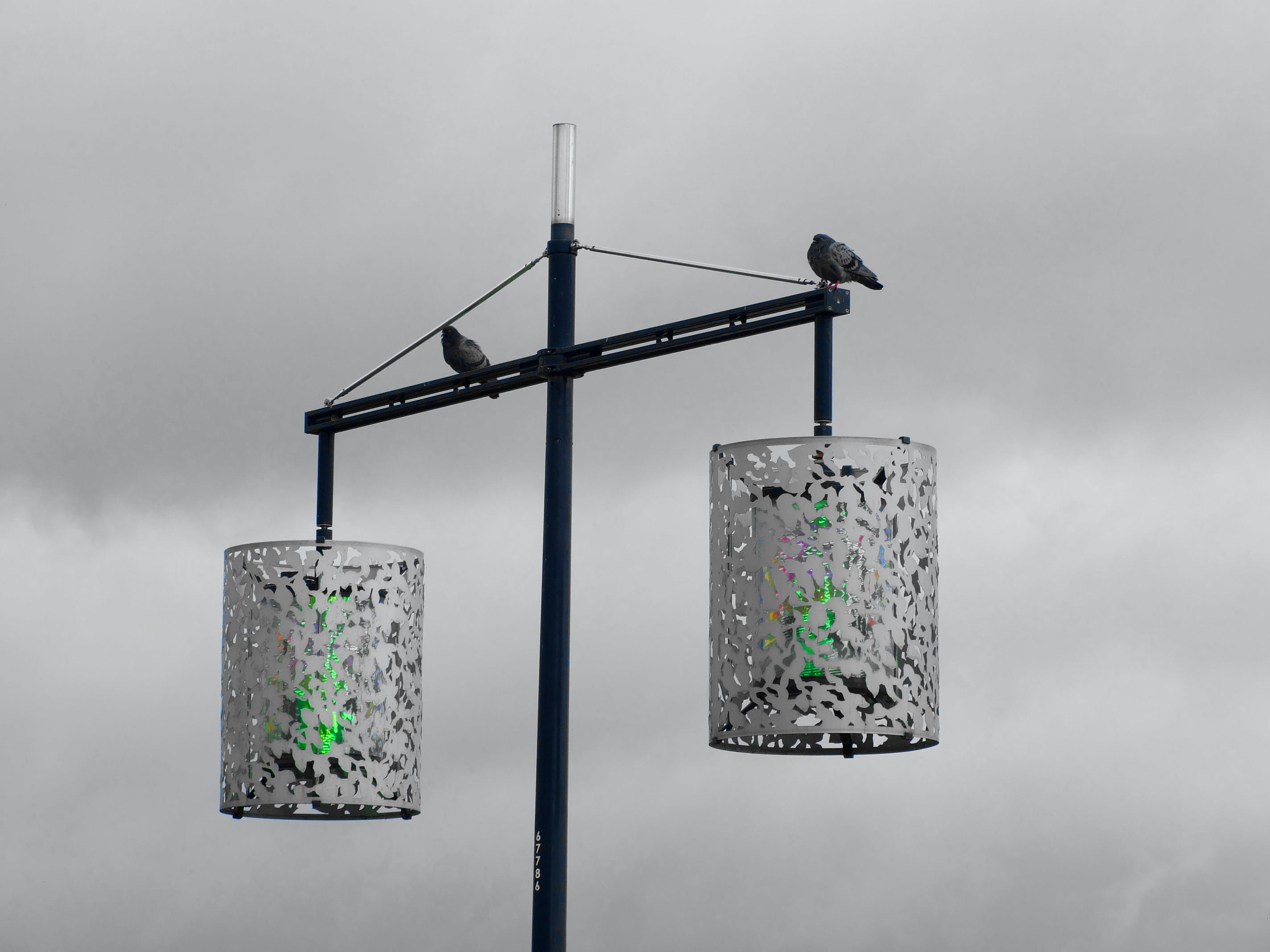 2 Street Light With 2 Bird Grayscale Photography