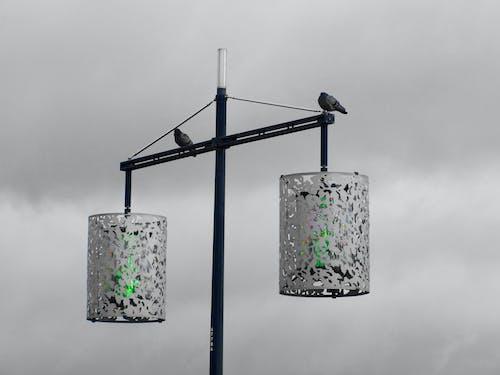 Darmowe zdjęcie z galerii z gołębie, jasny, kolor, latarnia