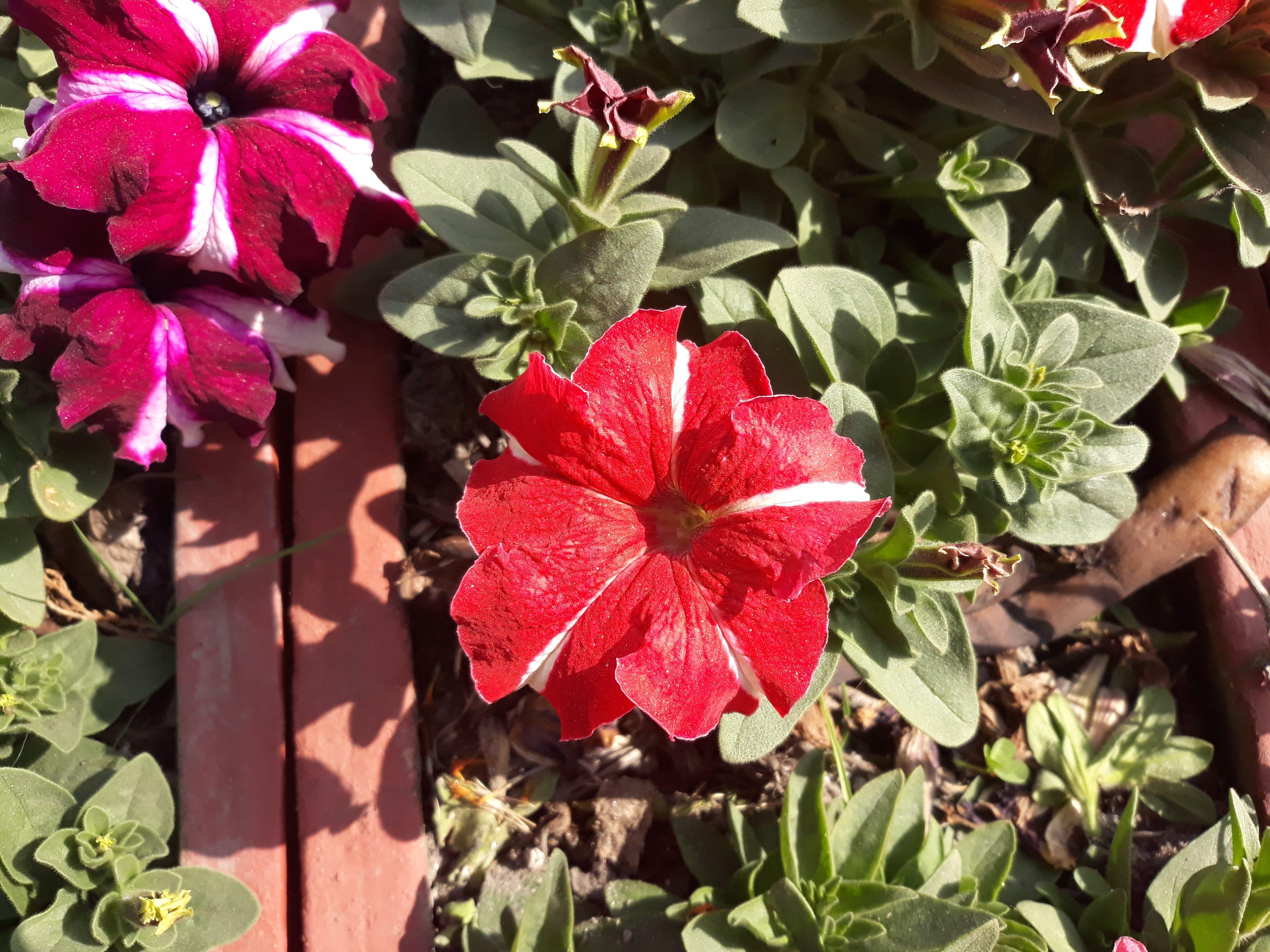 Free stock photo of beauty, flower, nepal, pawankawan