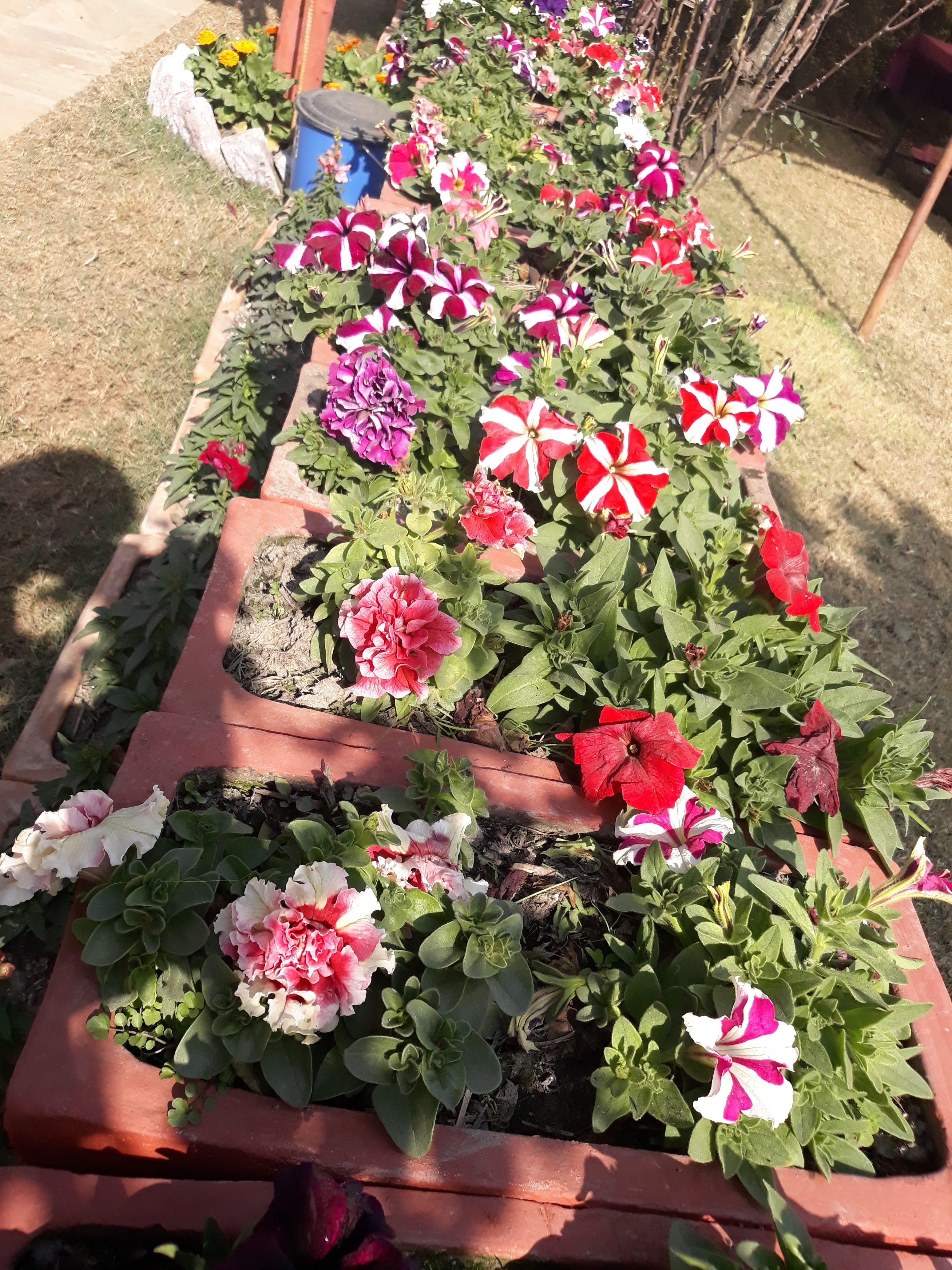Free stock photo of beautiful flowers, flower, nepal, pawankawan
