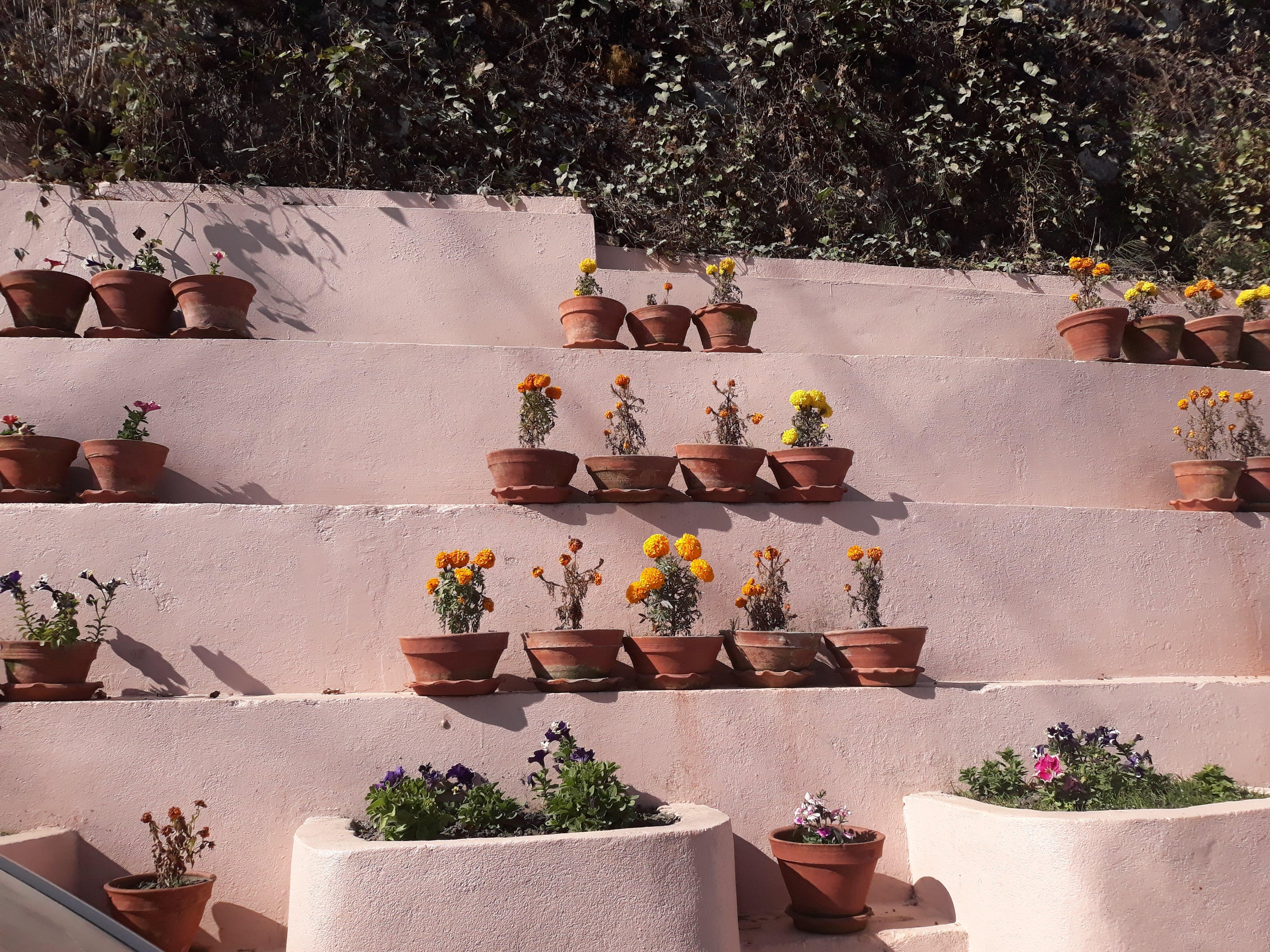 Free stock photo of beautiful flower, beautiful flowers, nepal, pawankawan