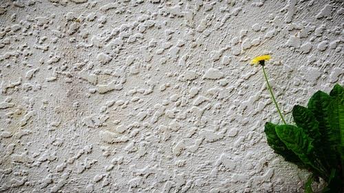 Immagine gratuita di abbandonato, bianco, calcestruzzo, cemento
