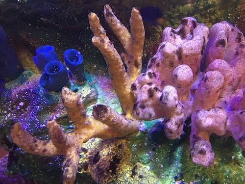 Imagine de stoc gratuită din trio colorat de corali