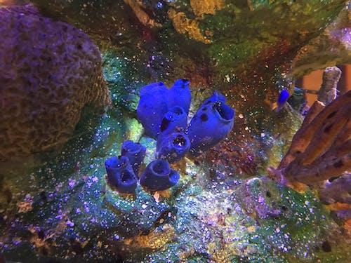 Imagine de stoc gratuită din colorat coral sci sci fi