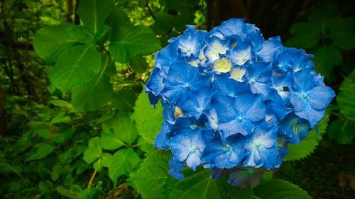 คลังภาพถ่ายฟรี ของ ช่อดอกไม้, ดอกไม้, ดอกไม้ป่า, ดอกไม้สวย