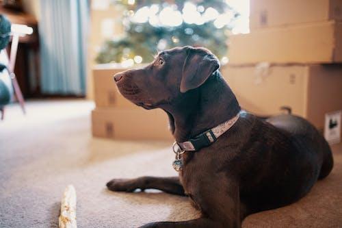 Základová fotografie zdarma na téma domácí mazlíček, domácí zvíře, pes, psí