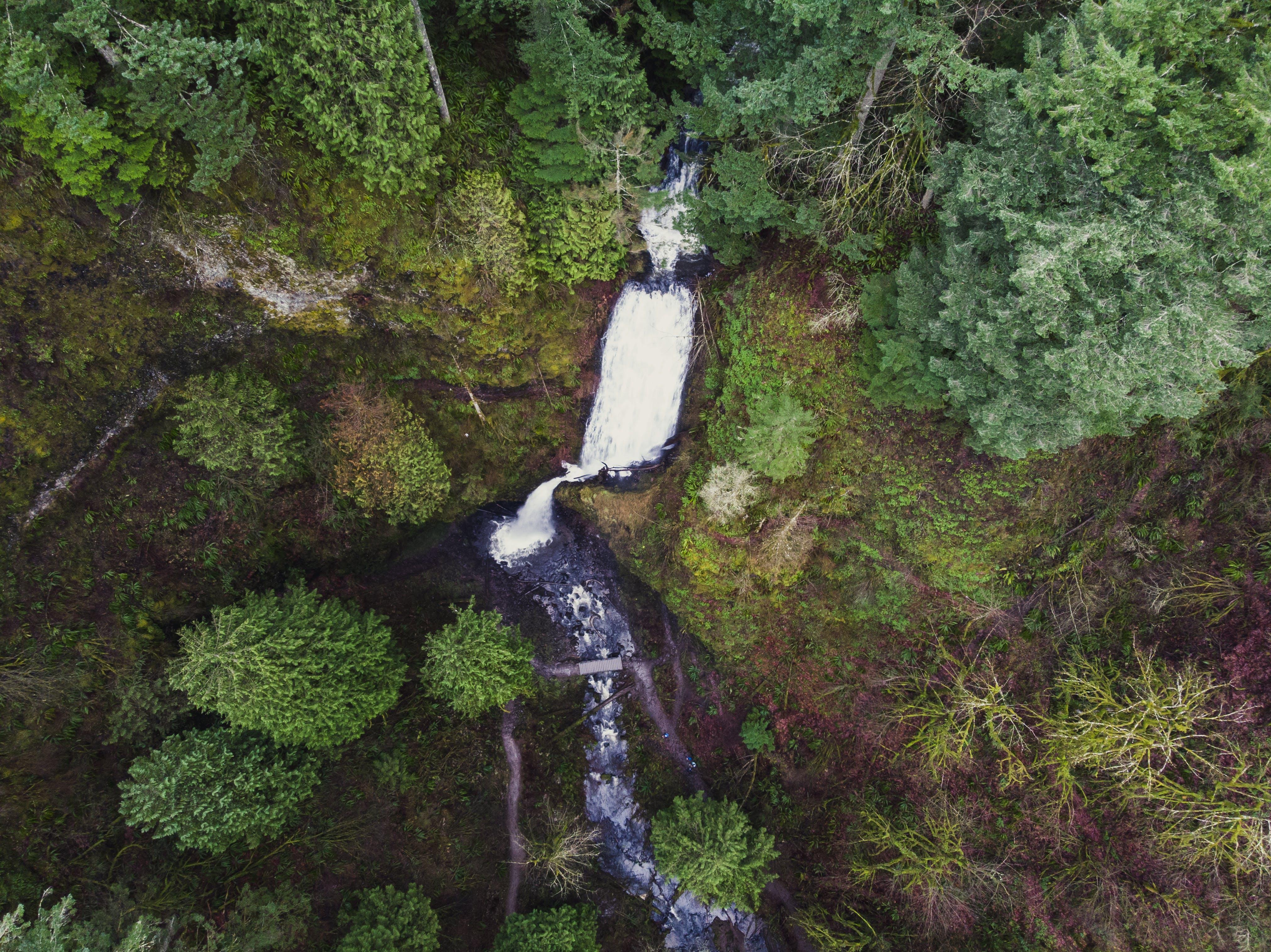 俄勒岡州, 森林, 樹木, 水 的 免费素材照片