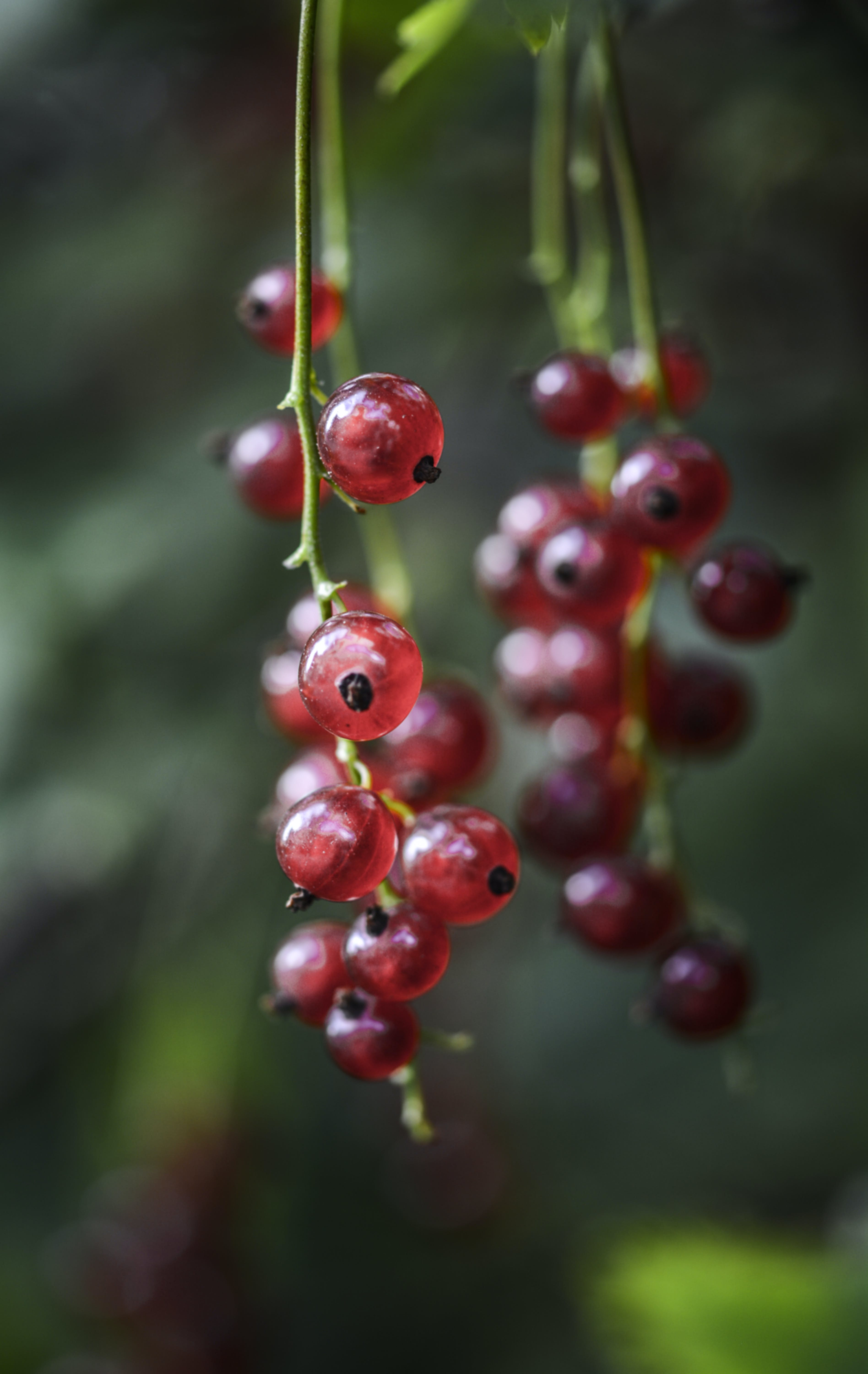 Focus Photography of Red Round Fruit
