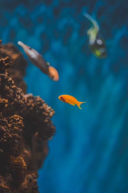 Orange Fish in Body of Water