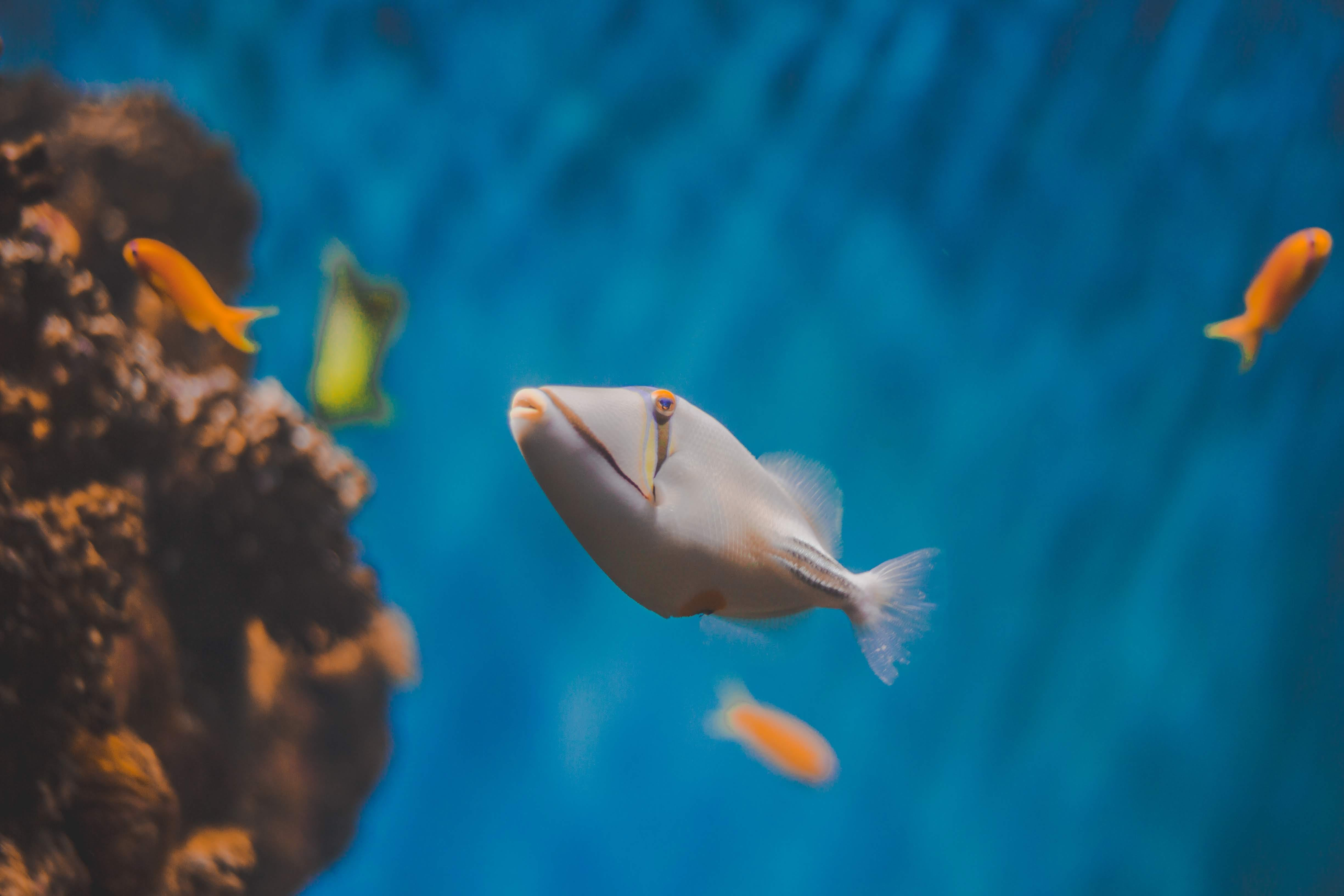 Selective Focus Photography Of White Fish
