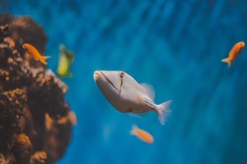 Darmowe zdjęcie z galerii z akwarium, dzika przyroda, podwodny, ryba