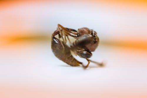 Gratis lagerfoto af død, død bug, insekt