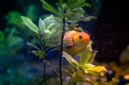 Gratis lagerfoto af akvarium, blå, dyr, fisk