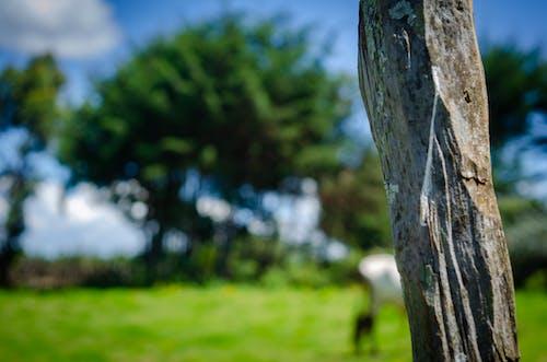 Δωρεάν στοκ φωτογραφιών με ζωή στη φύση, ξιφασκία, φόντο της φύσης, φωτογραφία φύσης