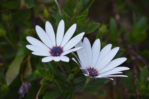 Gratis lagerfoto af blomster, close-up, farve, flora