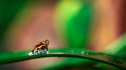 Fotobanka sbezplatnými fotkami na tému amazon jed žaba