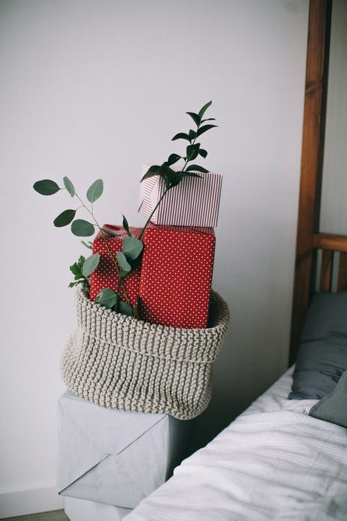 Green-leafed Plant in Gray Knitted Container