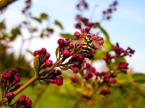 Free stock photo of bee, flowers