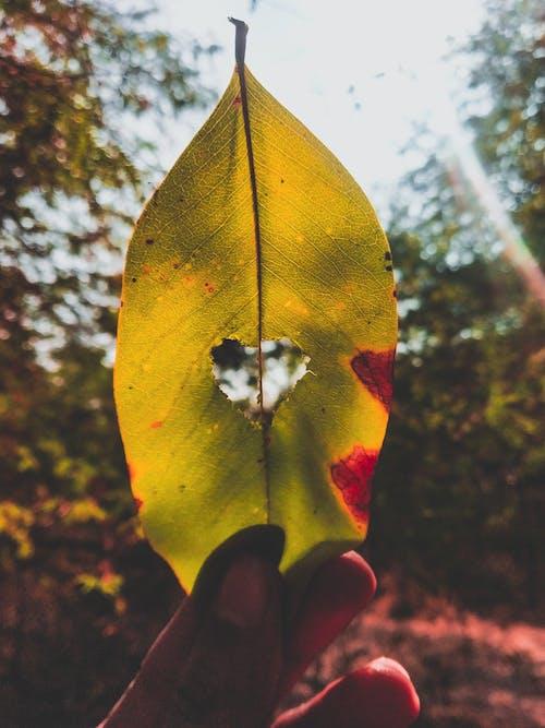 bulanık arka plan, Büyük yaprak, el, güneş ışığı içeren Ücretsiz stok fotoğraf