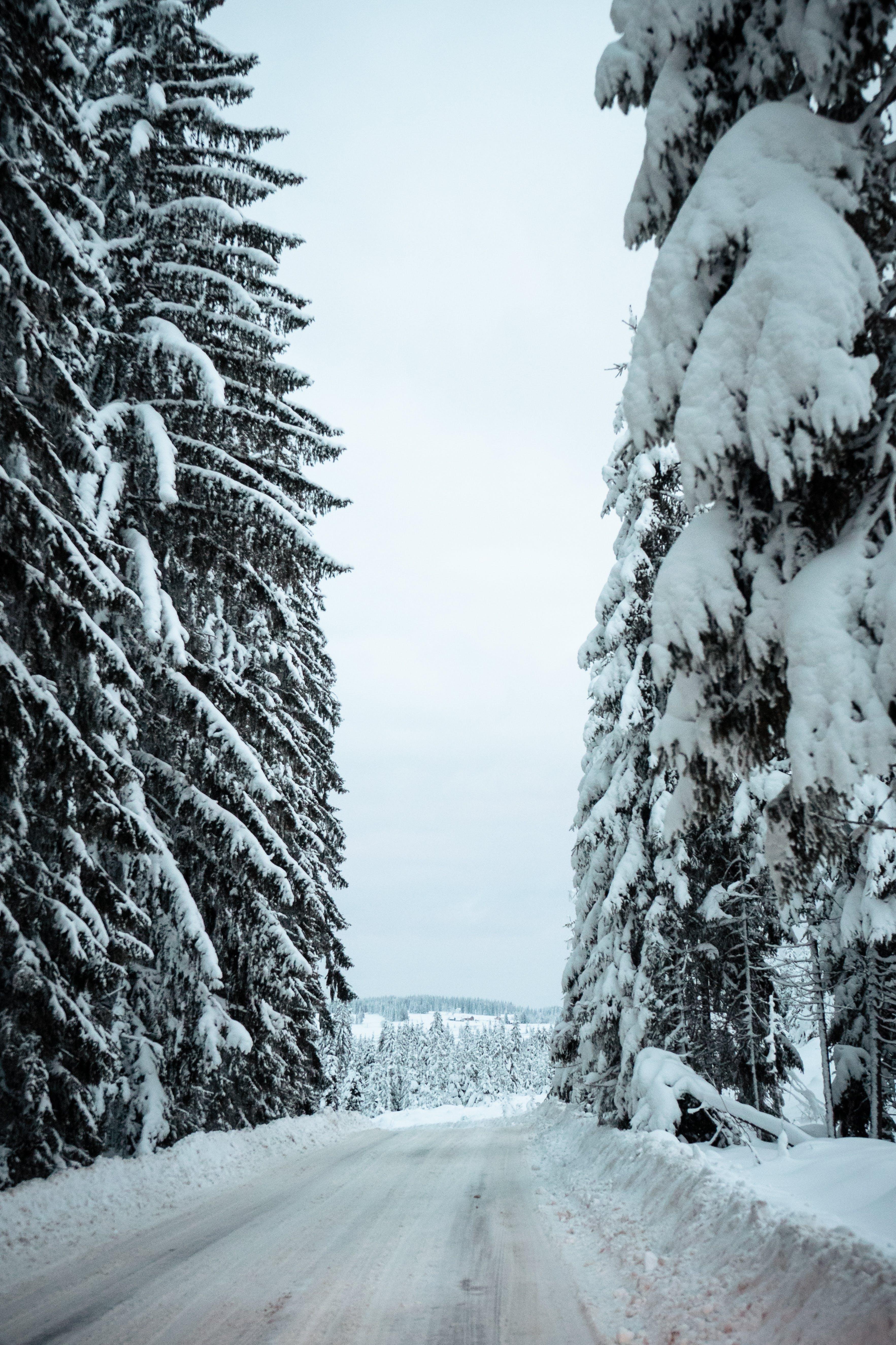Foto d'estoc gratuïta de arbres, bosc, boscos, branques