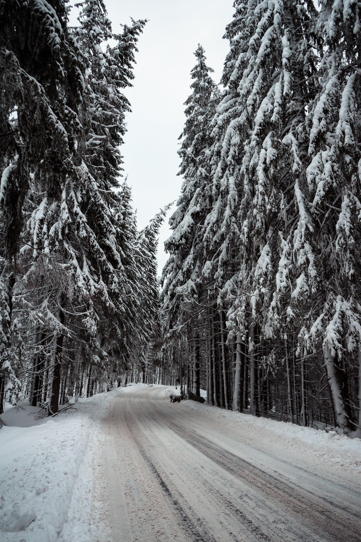Základová fotografie zdarma na téma malebný, mráz, počasí, příroda