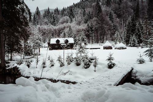 Безкоштовне стокове фото на тему «іній, дерева, засніжений, застуда»
