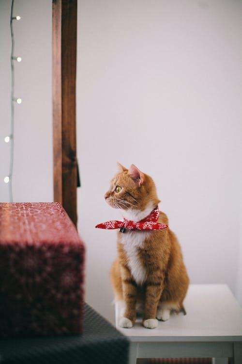 かわいらしい, よそ見, スツール, ネコの無料の写真素材