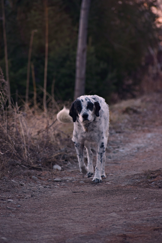 Ingyenes stockfotó állat, emlős, fajta, földes út témában