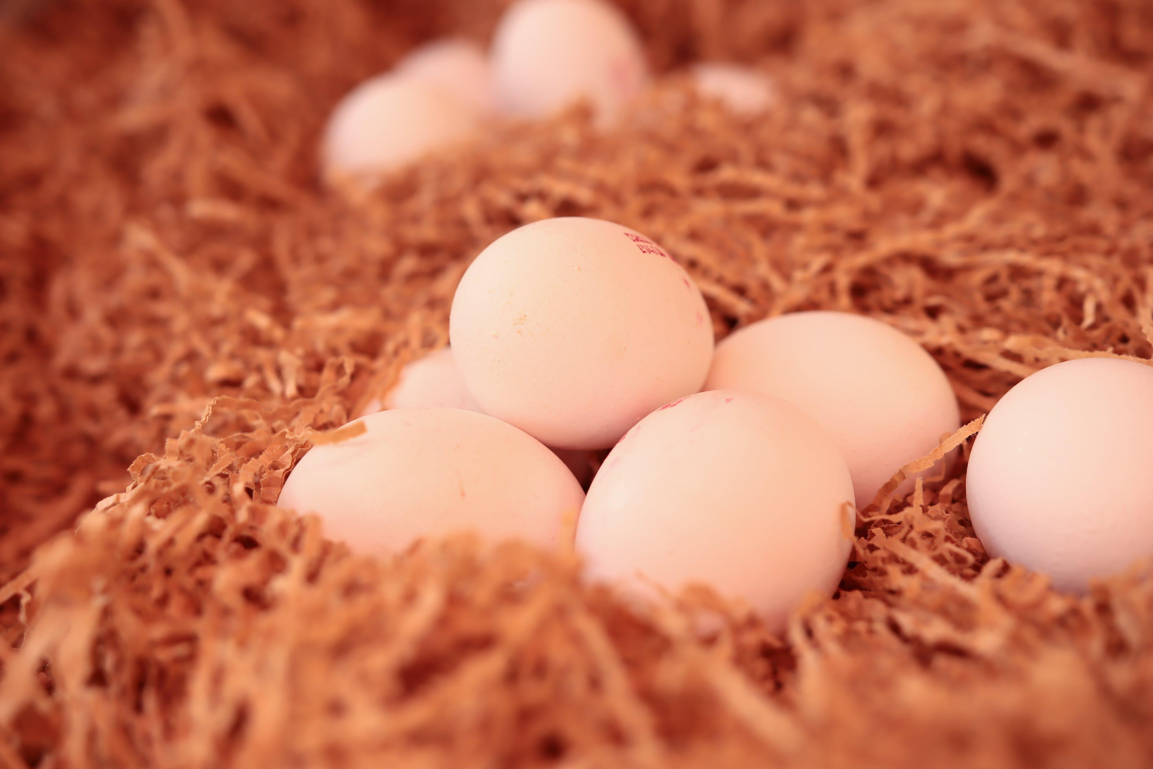 Free stock photo of eggs