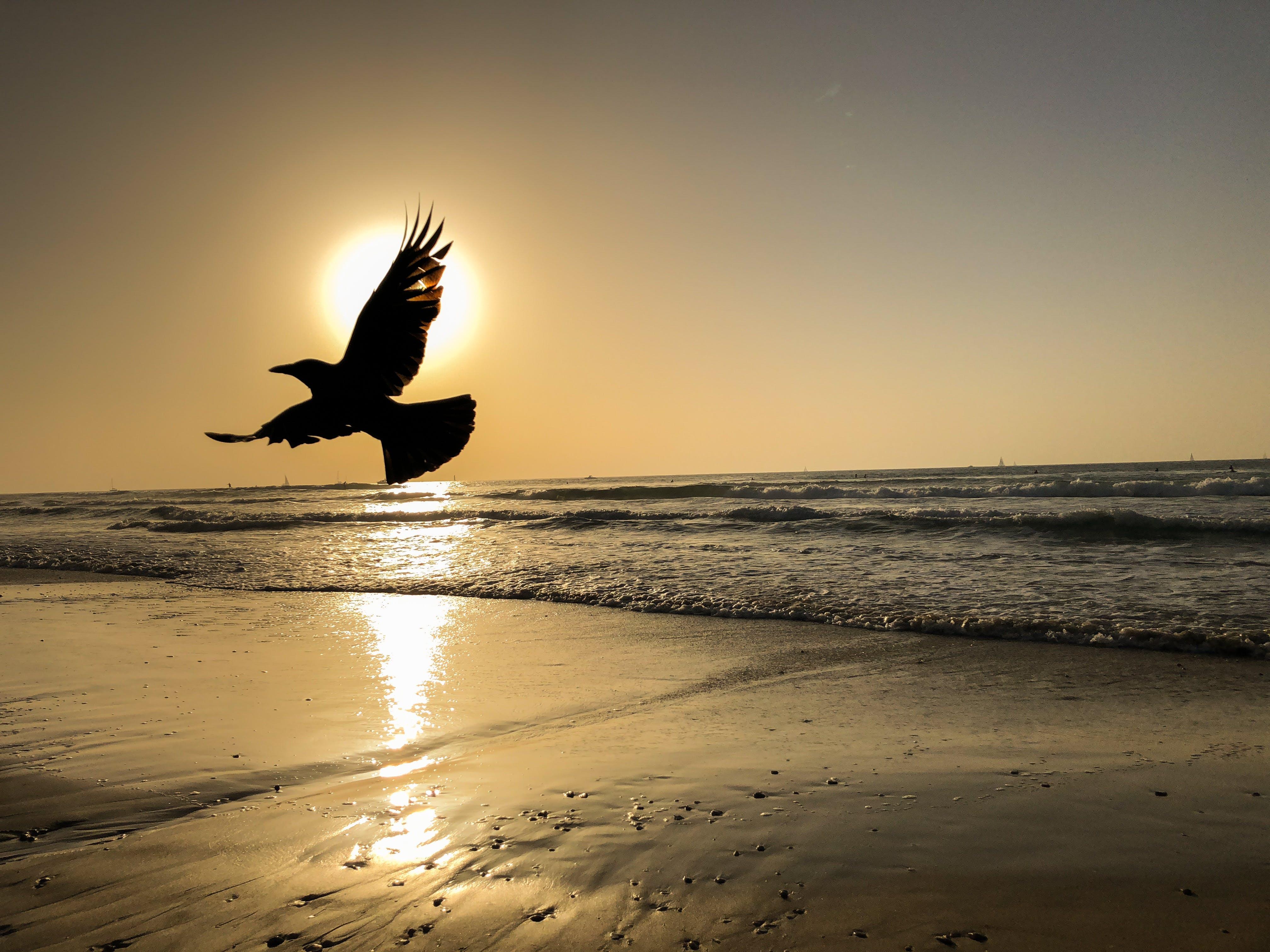 Free stock photo of beach, golden hour, golden sun, Israel