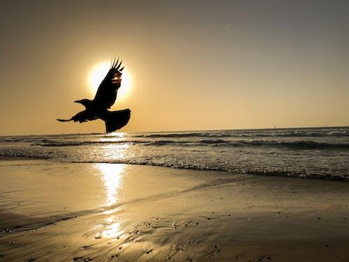 Free stock photo of beach, golden hour, golden sun