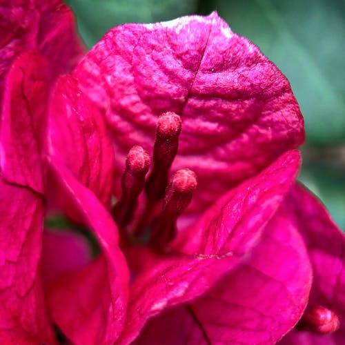 Free stock photo of closeup, flower, macro