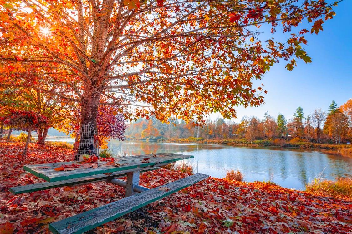 anotimp, apă curgătoare, arbori